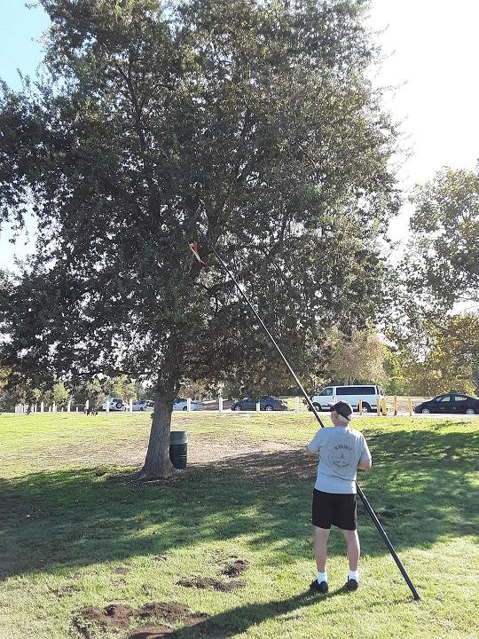 Don_Tree_smaller.jpg