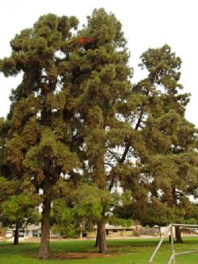 tree_1smaller.jpg