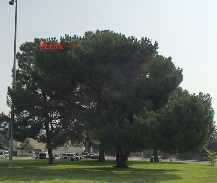 tree_2_smaller.jpg