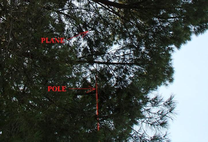 tree_3_smaller.jpg
